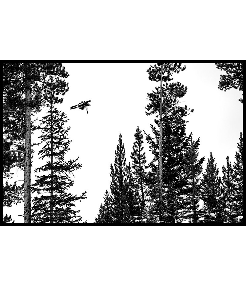 Perdu dans les arbres