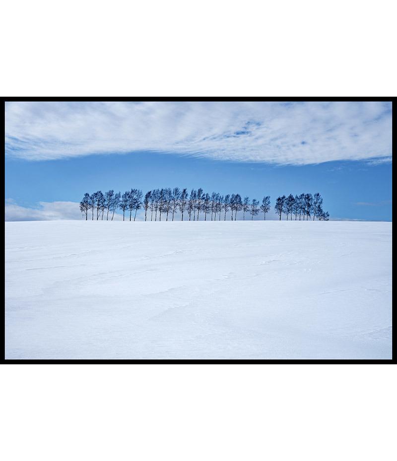 Les arbres d'Hokkaido (1/3)