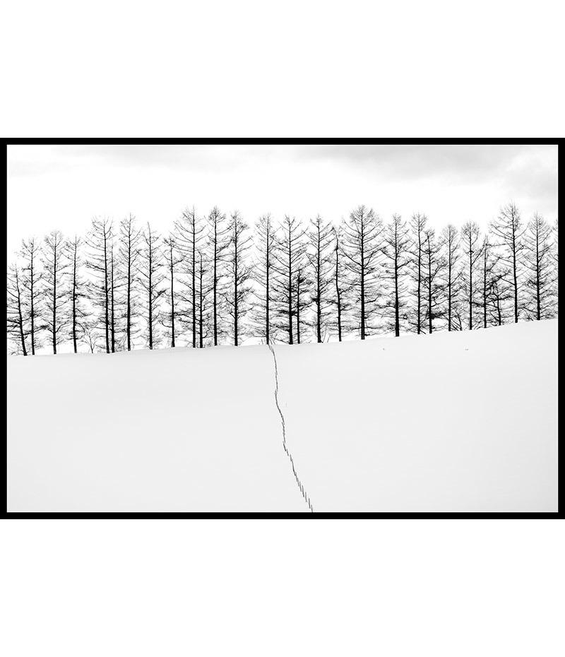 Les arbres d'Hokkaido (2/3)