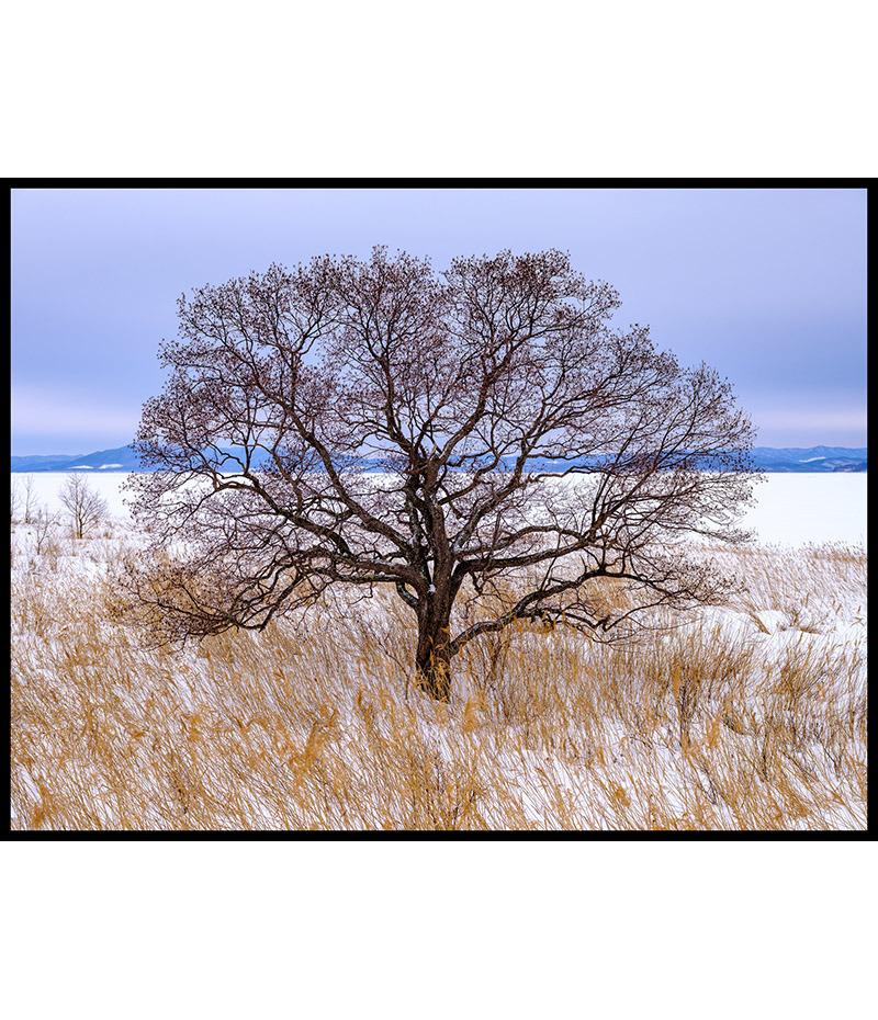 L'arbre du lac